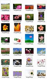 PlantsStockImages rr Plants and Flowers Stock Images